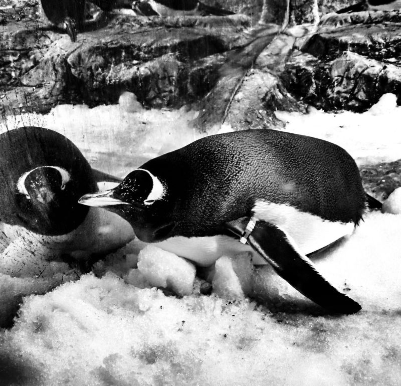 penguin Osaka aquarium kaiyukan Japan