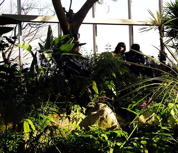 Kobe Japan Nunobiki garden Rokko greenhouse
