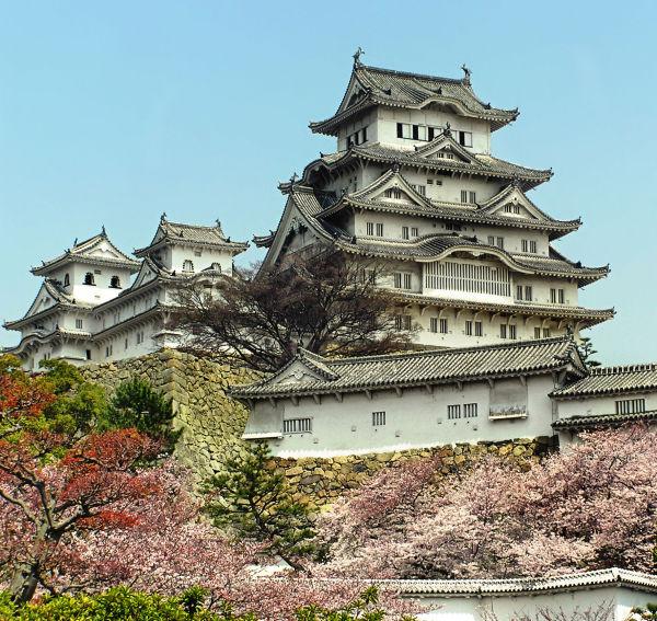 Himeji castle blossom sakura Japan