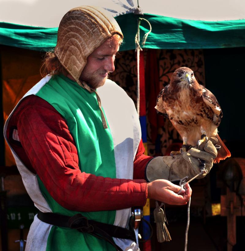 kenilworth-castle castle england falcon bird