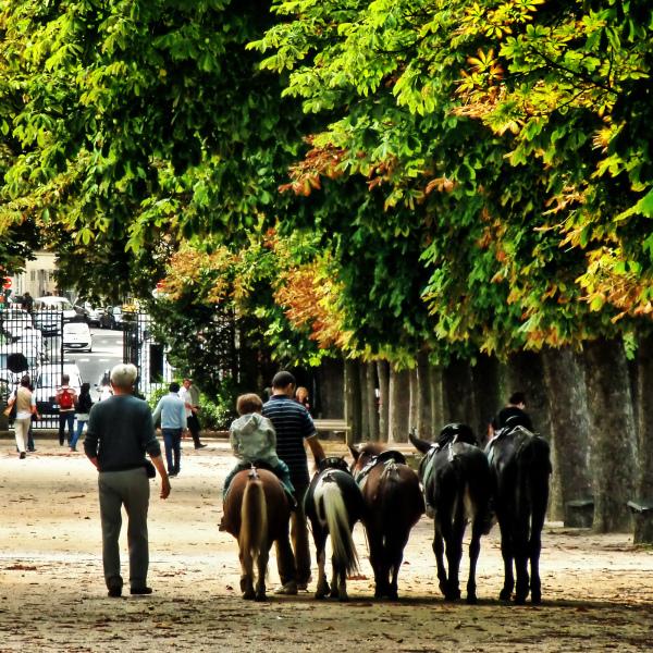 paris france garden luxembourg-garden donkey