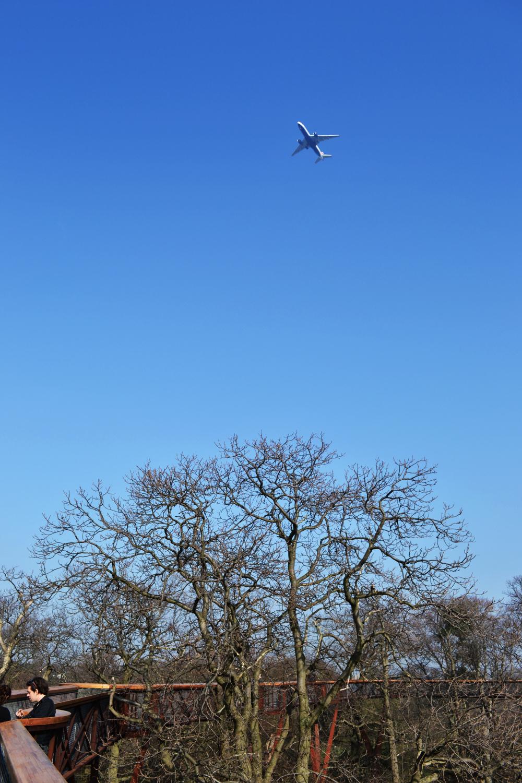 kew-gardens england tree xstrata aeroplane