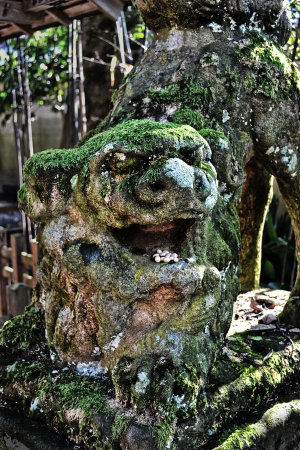 japan kyoto amanohashidate shrine statue komainu