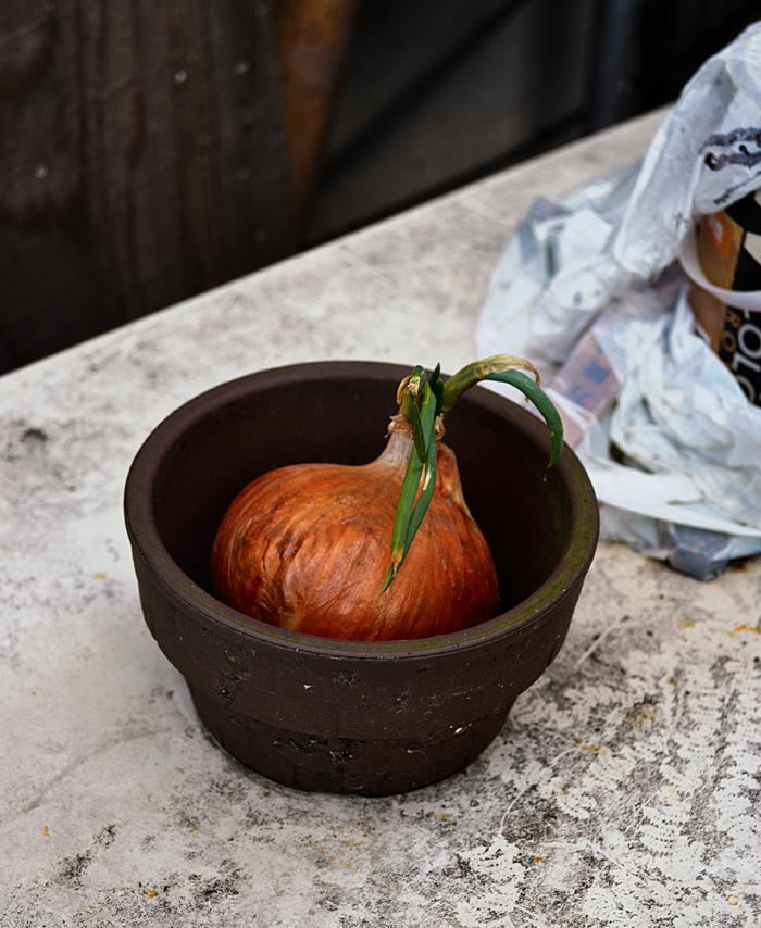 yunogo onsen japan onion okayama