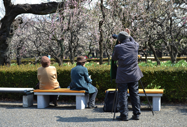 park tokyo shinjuku shinjuku-park japan blossom