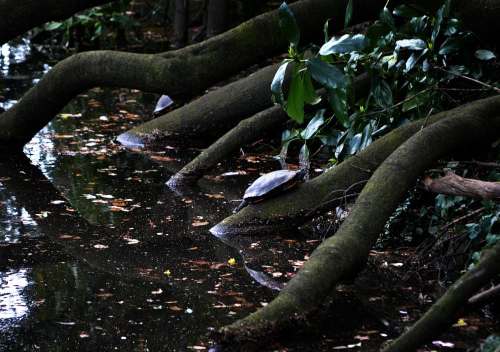 park tokyo shinjuku shinjuku-park japan turtle