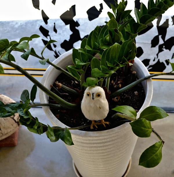 okayama japan owl plant objet zakka