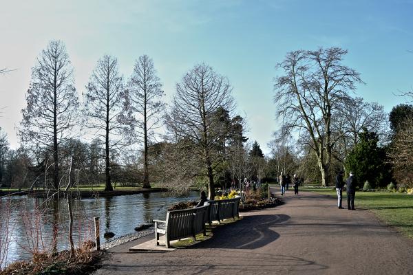 wisley garden england pond tree