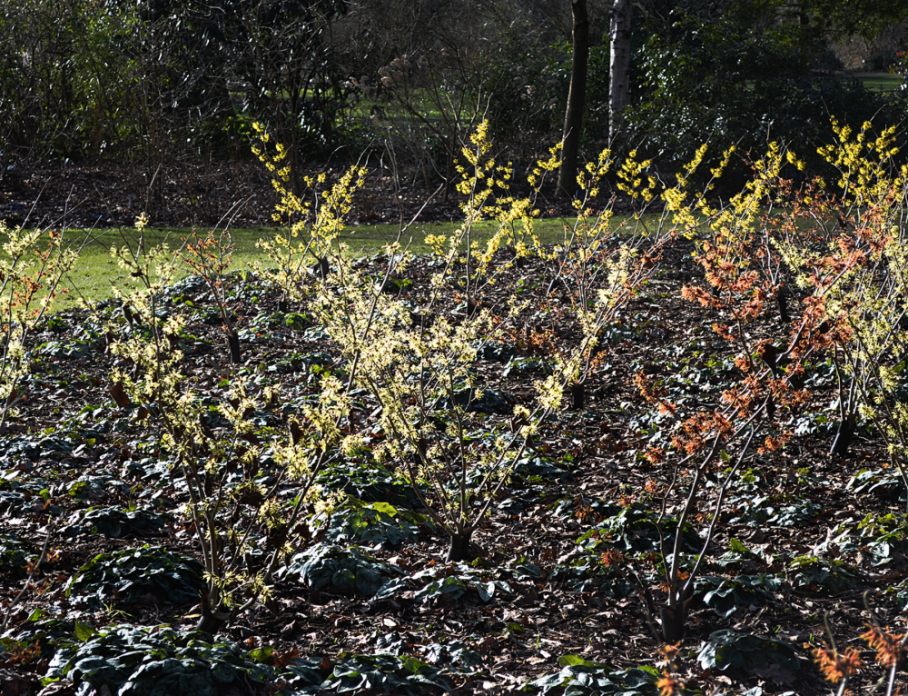 wisley garden england plant