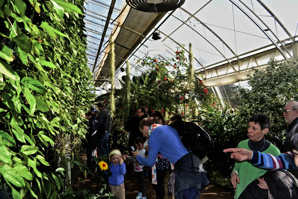 wisley england greenhouse tree flower