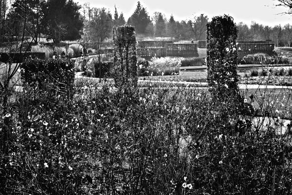 wisley garden england plant pond tree