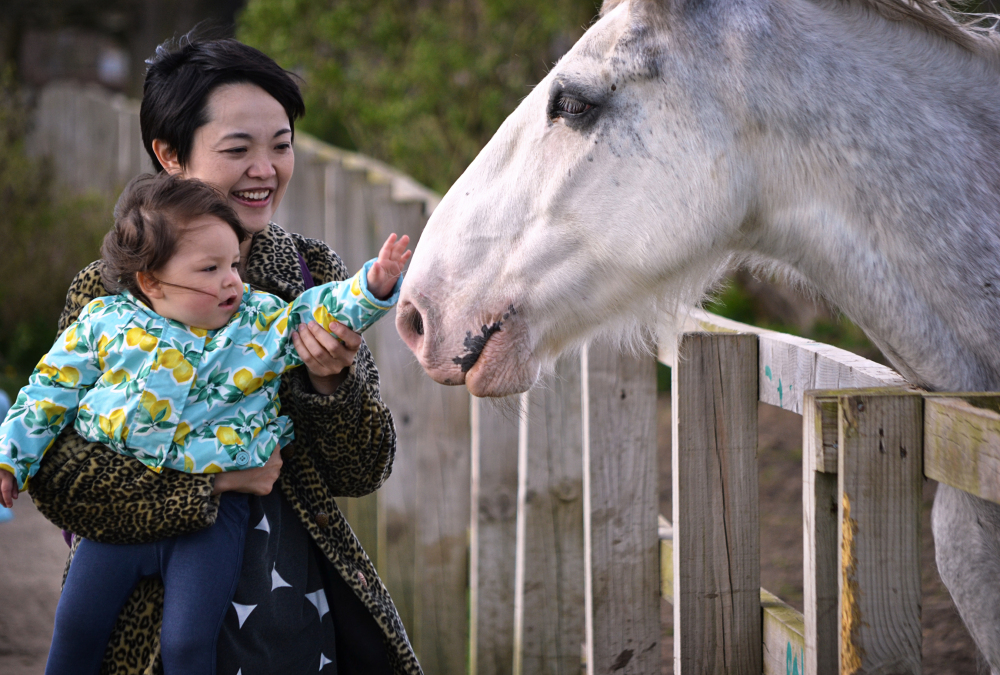 motspur-park england park horse