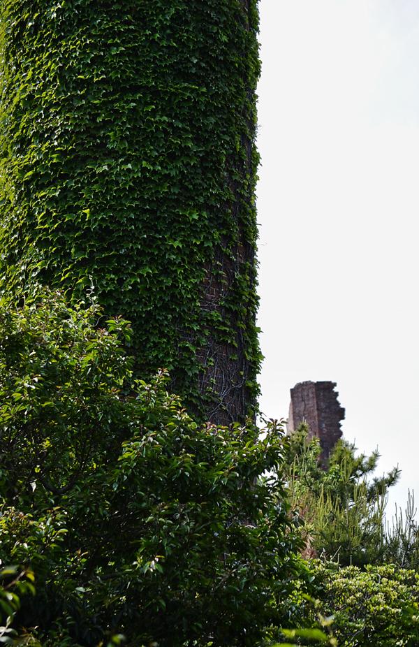 japan kagawa inujima seirensho tower ivy