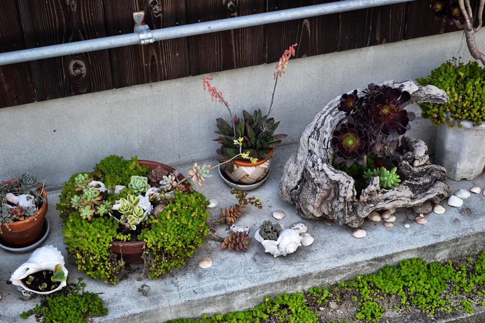 japan kagawa teshima plant garden