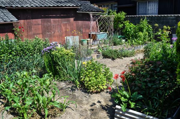 japan kagawa naoshima garden