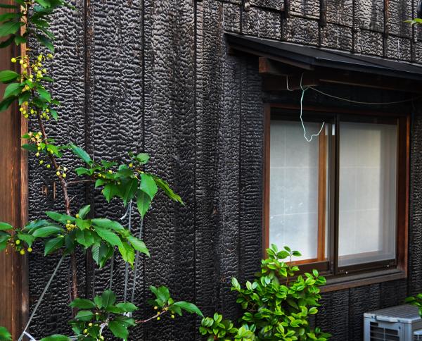 okayama omoto japan house plant