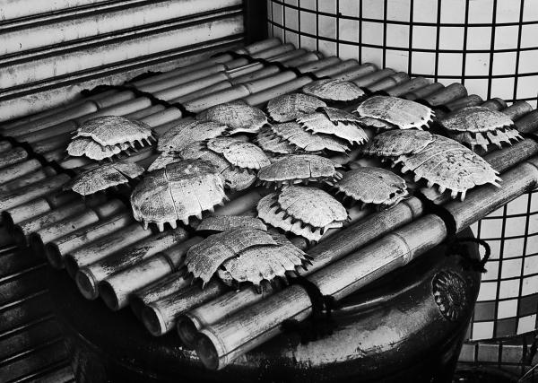 okayama omoto japan izakaya turtle-shell