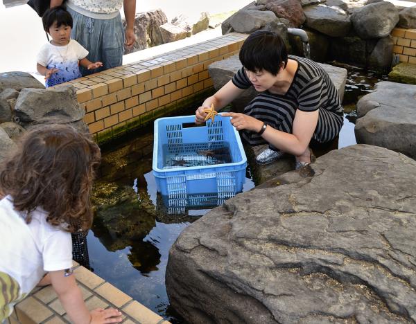 okayama japan tamaño mia mayumi aquarium shibukawa