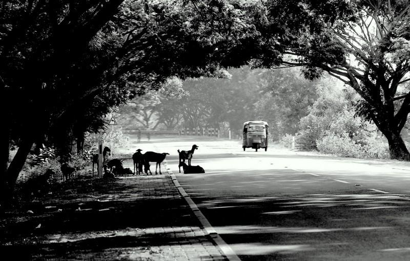 Roadscape - Madras to Pondicherry