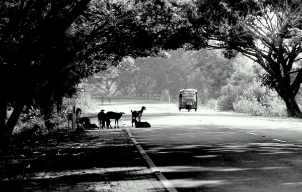 Roadscape - Madras to Pondicherry
