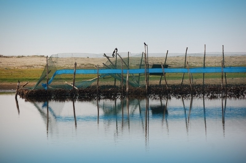 Fishing blues!