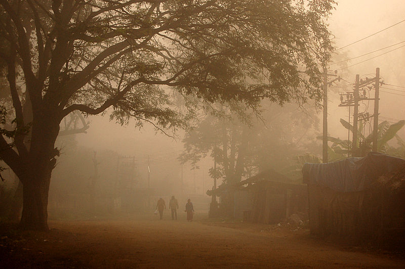 A fine foggy morning at Coorg!