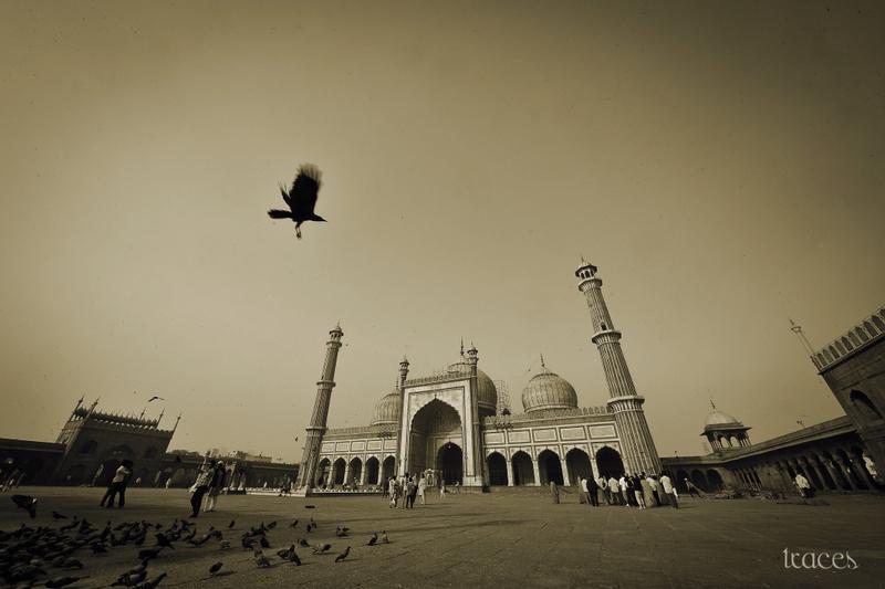 Flight of the Allah's Bird