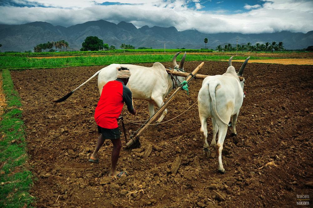 The diligent farmer