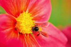 Nectar for breakfast