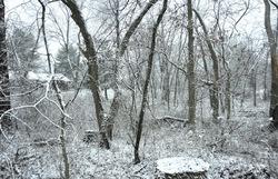 Whispering white woods