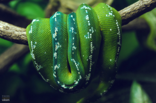 In green and camouflaged!
