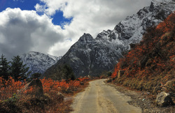 Roads to the Himalayan Alpines