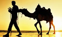Kutchian Camel Rider
