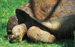 Mr. Aldabra is a bit slow...