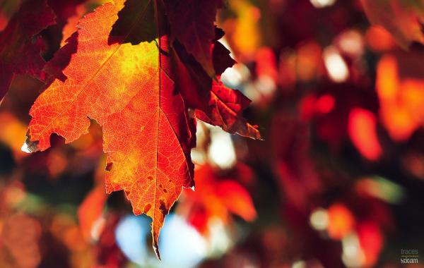 The autumn noon