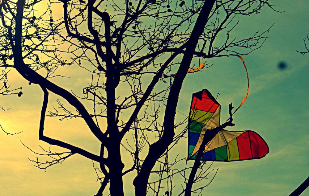 Fly Away, Little Heart, Fly Away