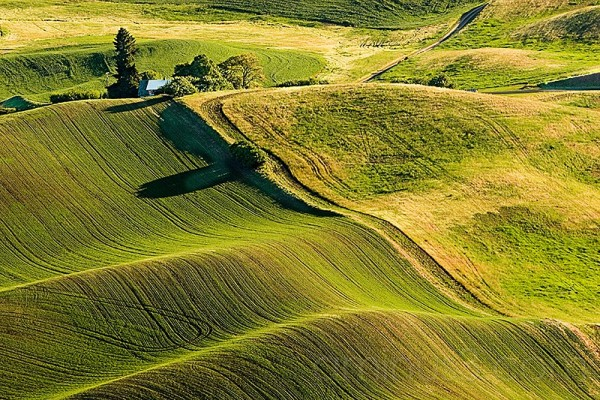 farm land in palouse