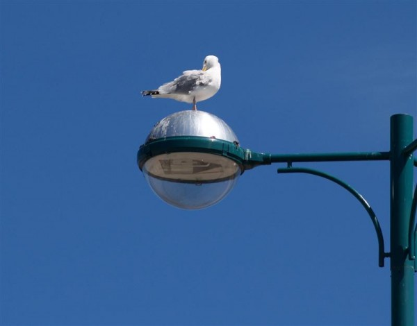 Beech Bird