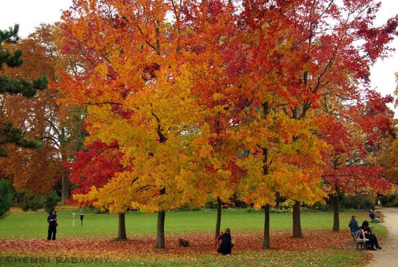 Couleurs d'automne au bois de Vincennes