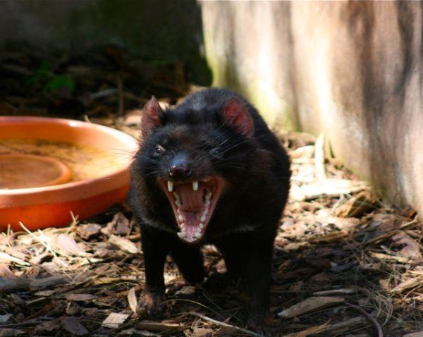 tasmanian delight!