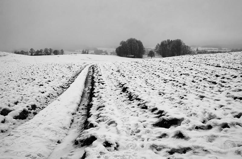 field / frankenburg