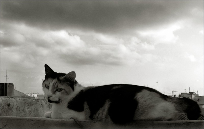 Cat & Rain Clouds