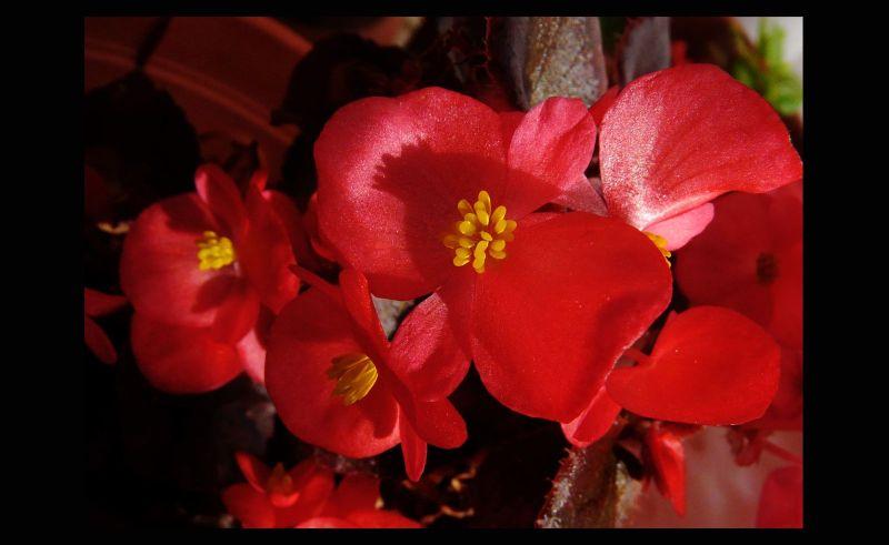 Summer red flowers in my garden