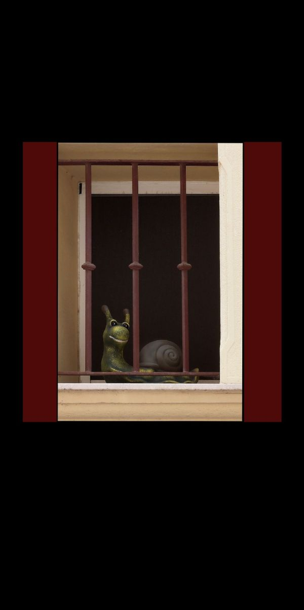 Snail by The Window