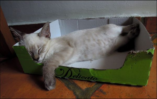 Kirin - A Sound Sleep in His Favorite Box