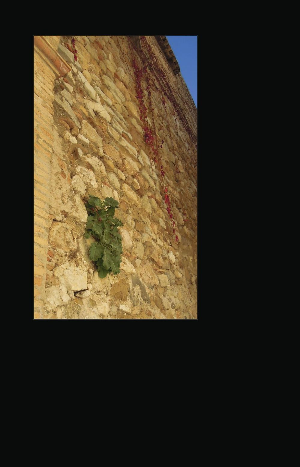 Weeds Growing in The Stone Wall