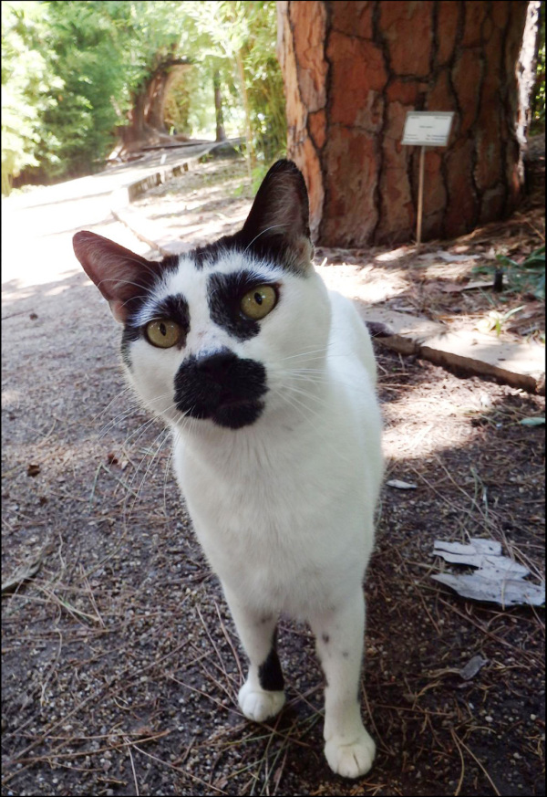 Bicolor Cat in The Botanical Garden