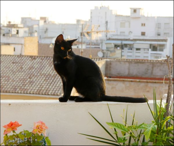 Morning Visiter at Our Roof Terrace