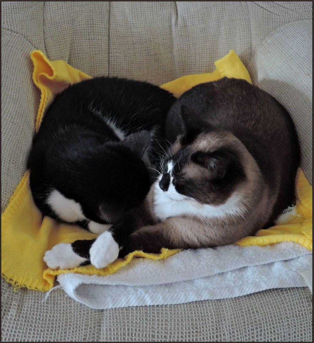 Felix & Xena Sleeping Together