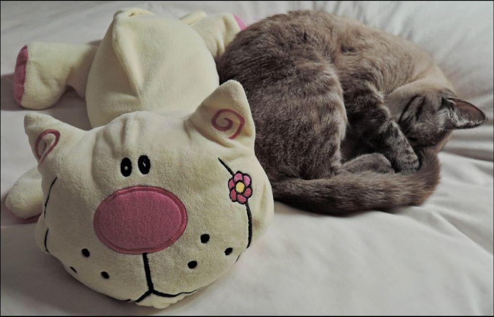 Kirin Sleeping with His Favourite One